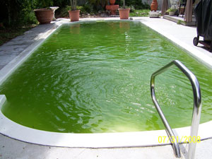 Do I Have Algae In My Swimming Pool R R Pools